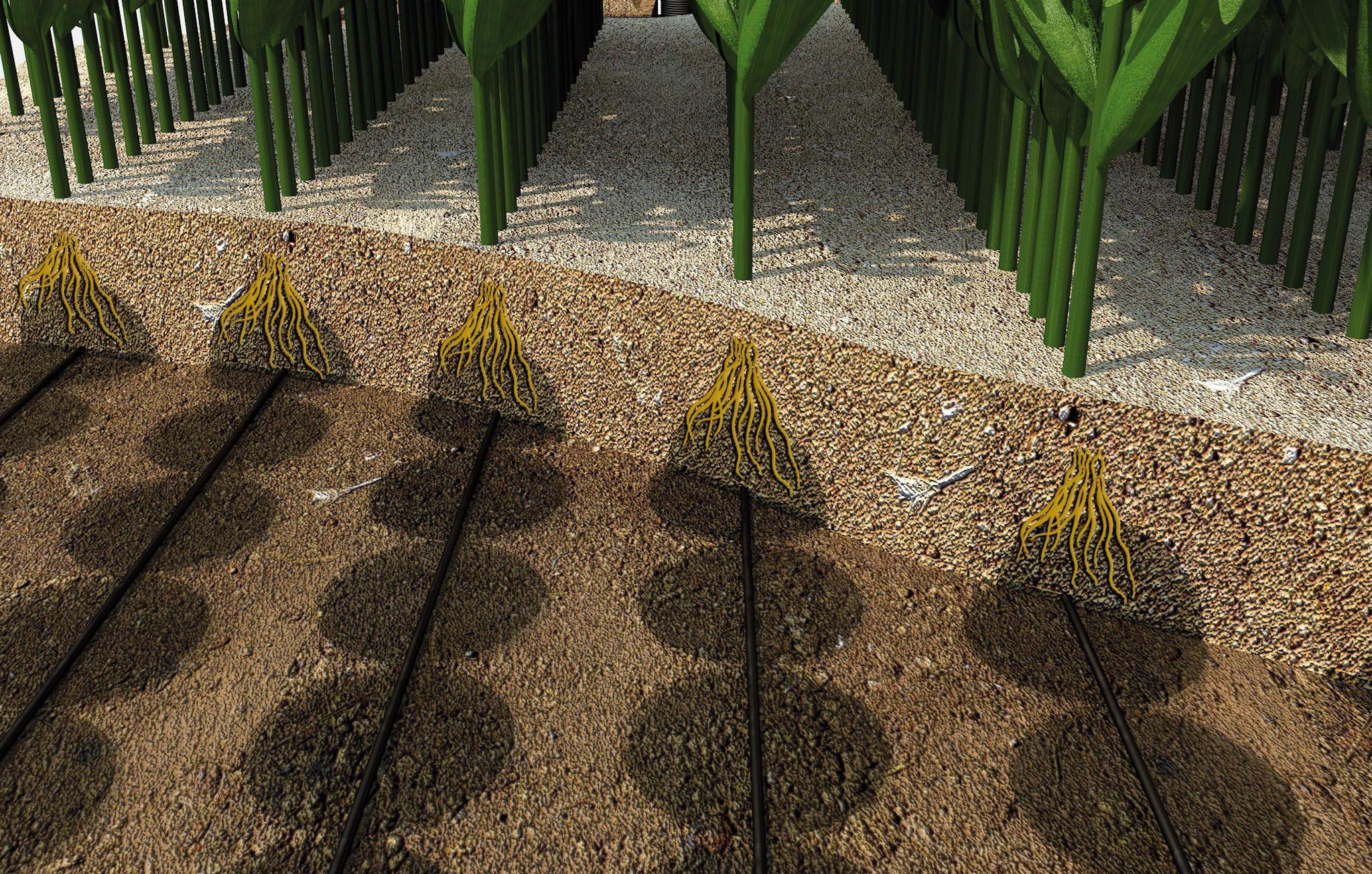 subirrigazione e risparmio idrico